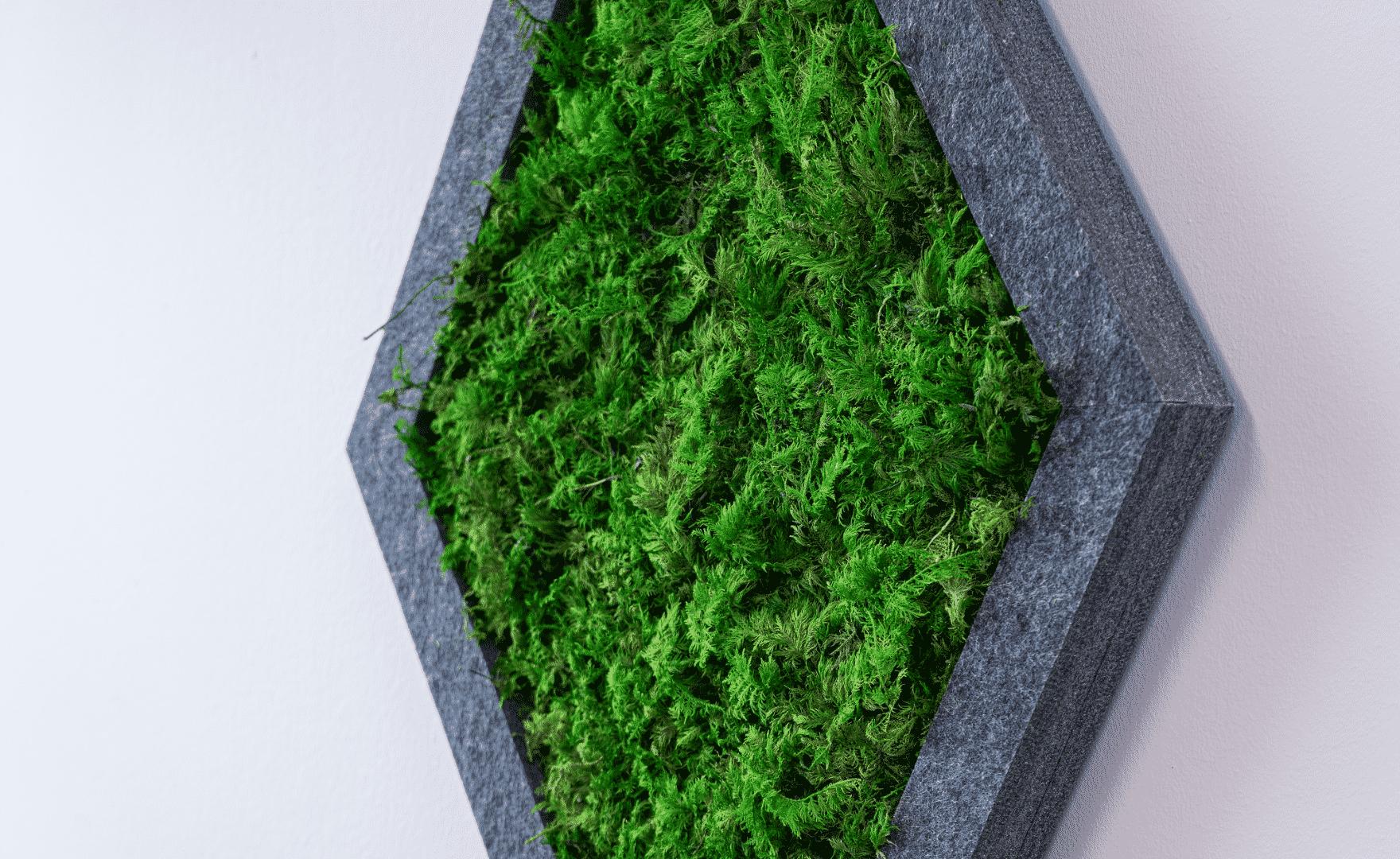 Quiet Earth Moss - Fern Moss Feature