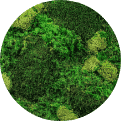 Quiet Earth Moss - Mixed Moss Color