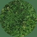 Quiet Earth Moss - Sheet Moss Dark Green