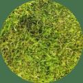 Quiet Earth Moss - Sheet Moss Light Green