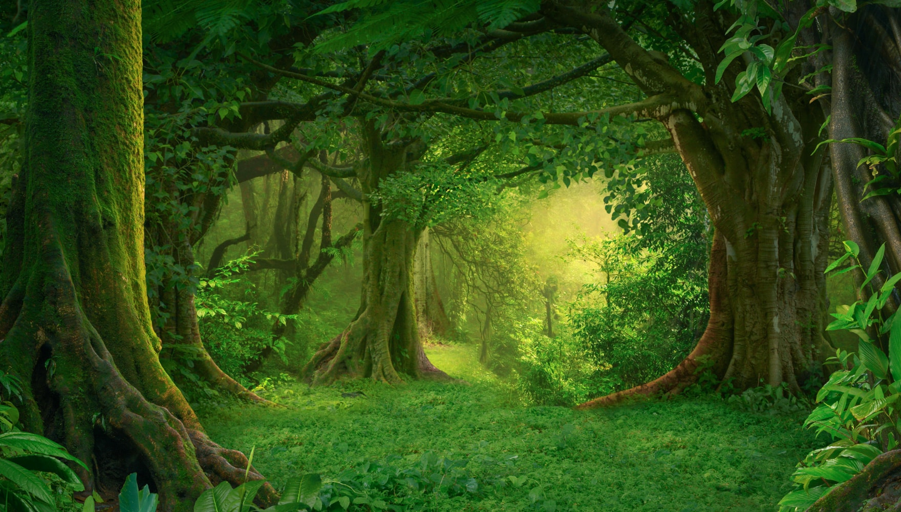 biophilia-forest